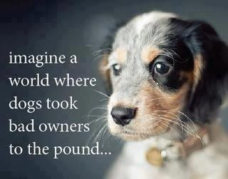 IMAGINE A WORLD WHERE DOGS BROUGHT BAD OWNERS TO THE POUND